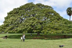 この木なんの木の大きさ